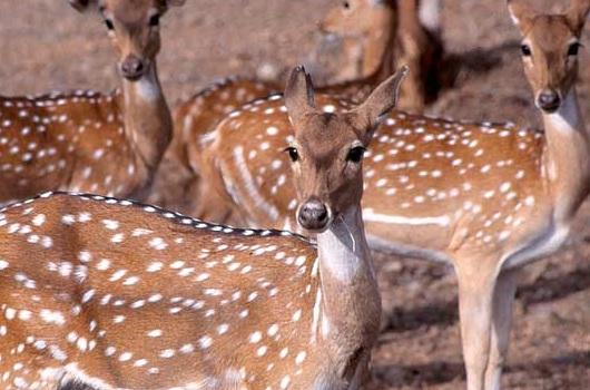 Askot Wildlife Sanctuary