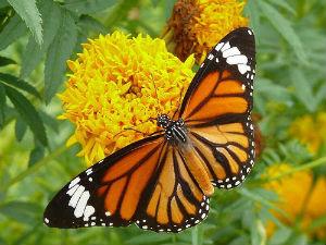Butterfly Safari